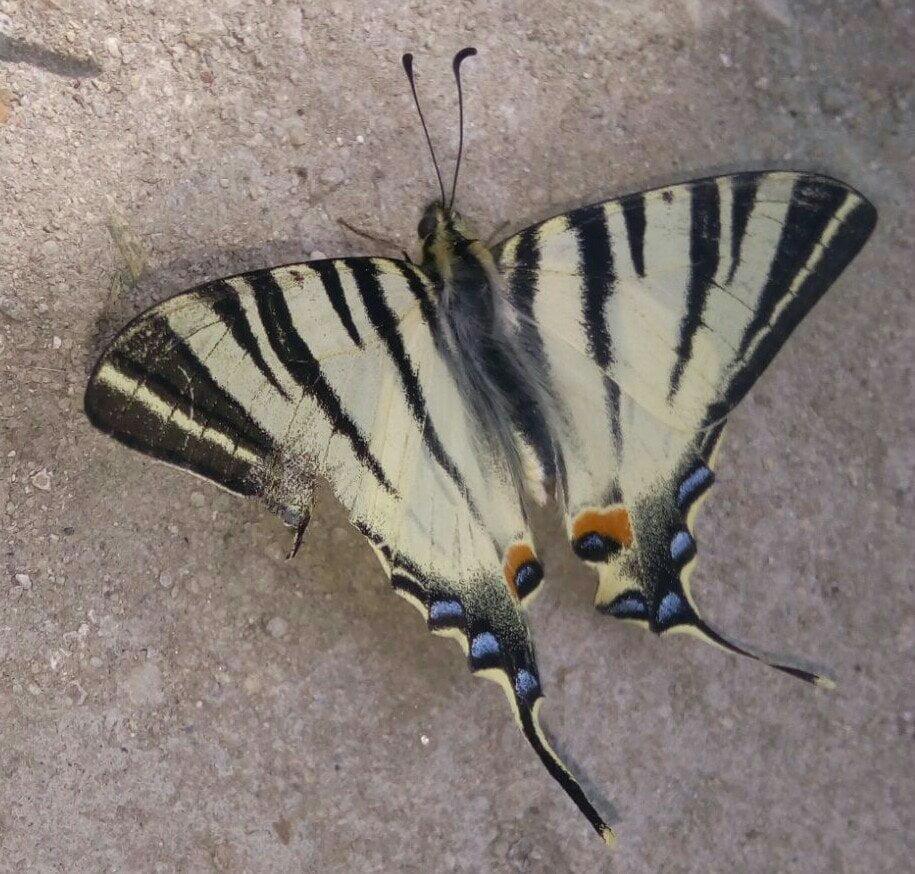 poza marita cu fluture