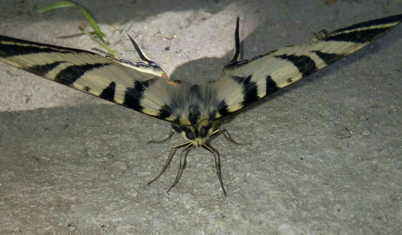 big butterfly picture