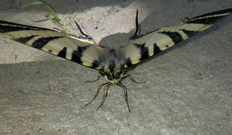 poza cu fluture mare