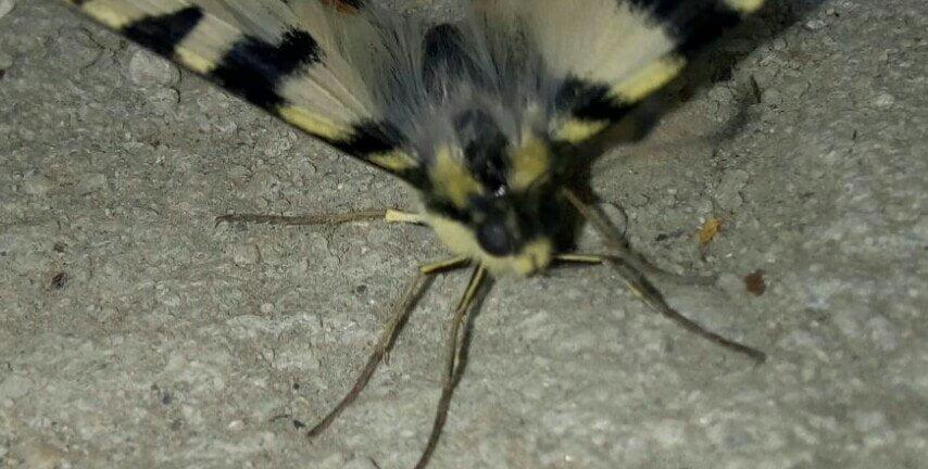 poza cu fluture